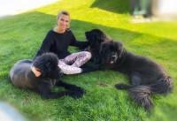 Hundesalon Sabine BOGULAK